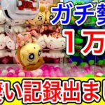 【鬼滅も楽勝】クレーンゲーム1万円チャレンジ!本気出してみた結果が凄すぎた!