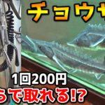 【危険度MAX】クレーンゲームの景品がチョウザメだったww