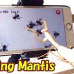 カマキリがアプリゲームで遊んだ結果!※Playing Mantis