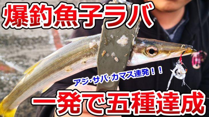 アジ・サバ・カマス、ライトゲーム革命。投げて落すだけで堤防にいる魚が狂ってしまう「魚子ラバ」の実力がヤバかった!!