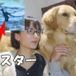 ゲームのモンスターに威嚇しまくる愛犬が可愛いww