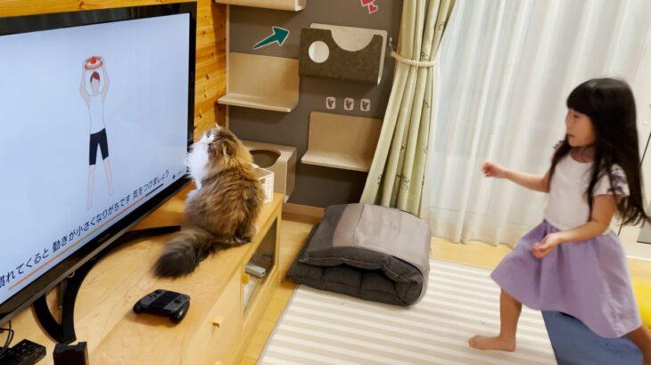 娘達のトレーニングゲームを妨害する猫