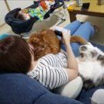 ゲーム中も猫にモッテモテのママ