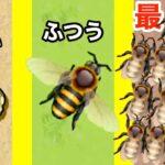 幼虫から始まるハチをめちゃくちゃ増やすゲーム【 Pocket Bees 】