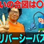 【夏のリバーシーバス攻略】アユを意識したゲーム展開が吉!オヌマンのシーバス塾!
